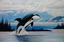 Orca 029