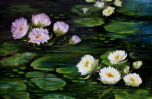 Water Lilies 008